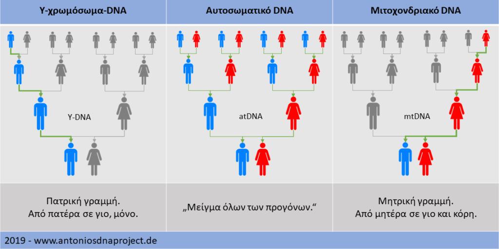 Επισκόπηση DNA