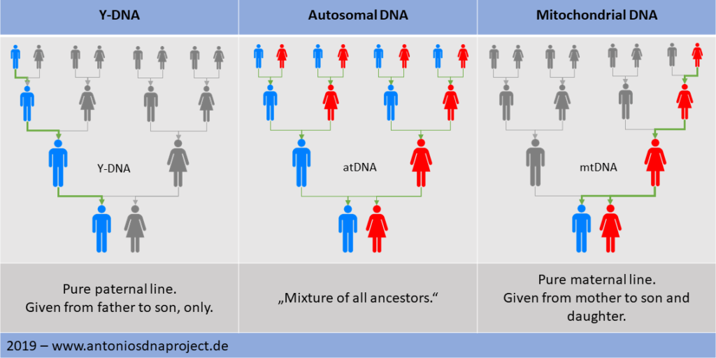 Overview DNA