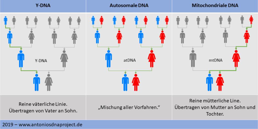 Übersicht-DNA